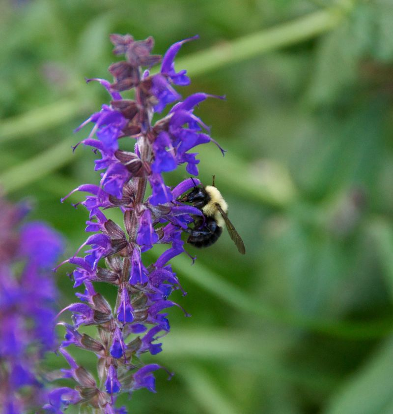 Purple flower and bee 1