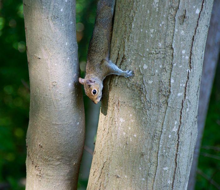 Squirrel upside down 2