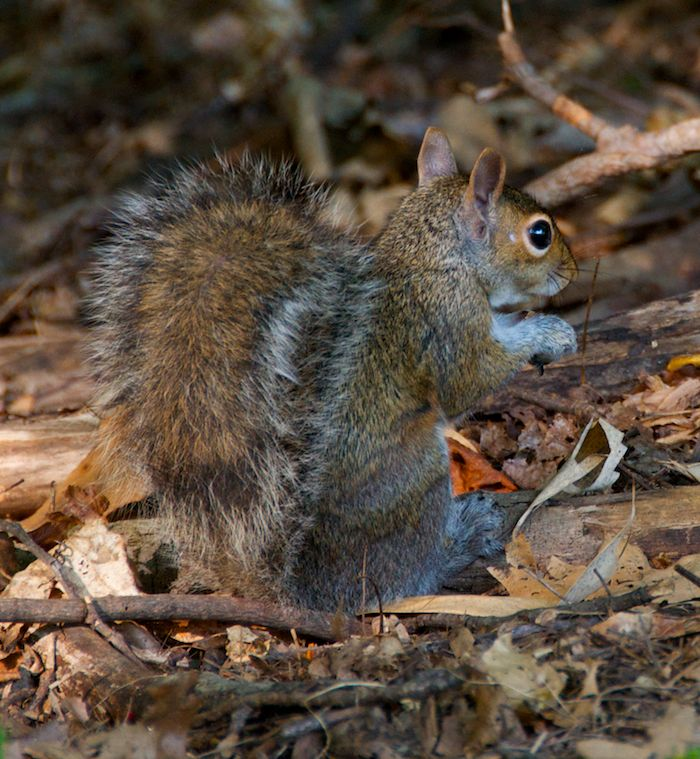 Squirrel ground 2