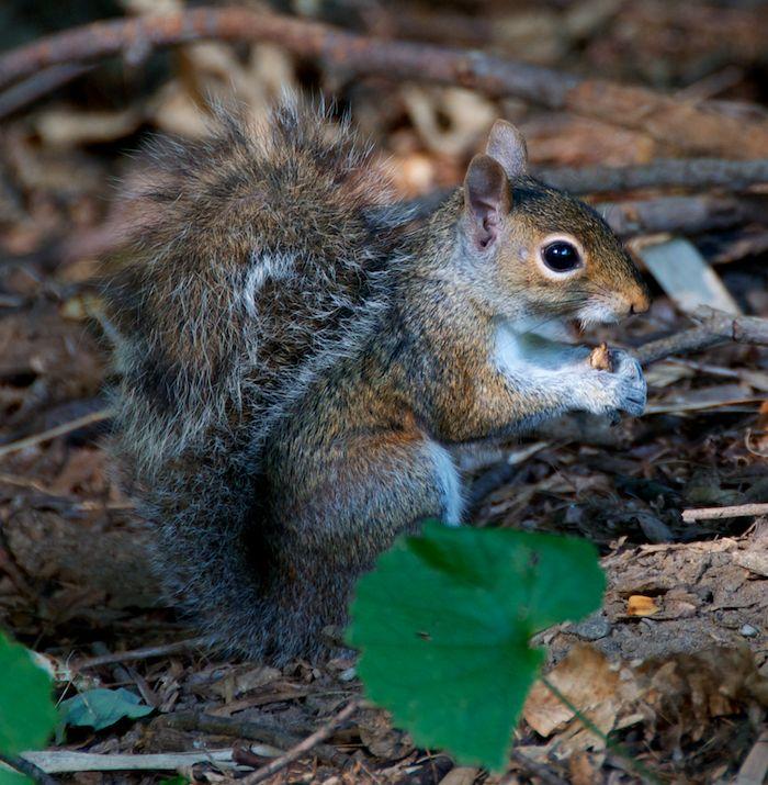 Squirrel ground 5