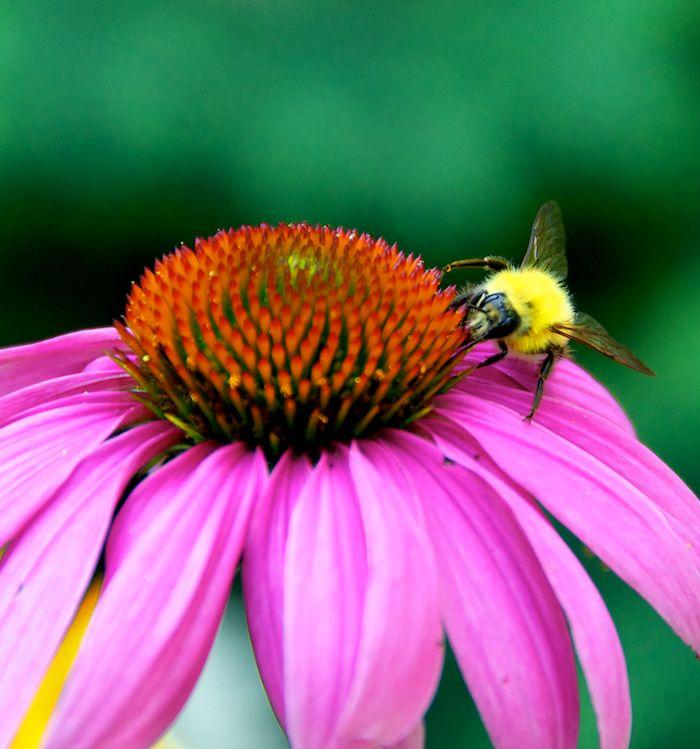Bee flower 2