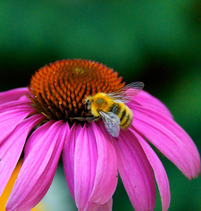 Bee flower 3