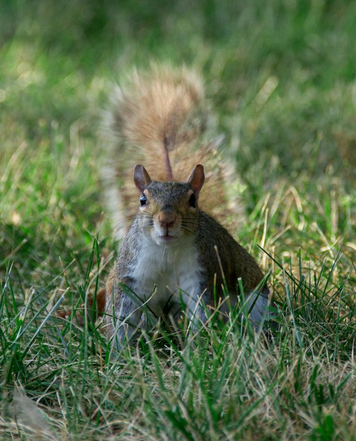 Washington dc squirrel 3