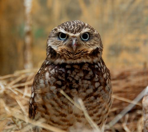 Owl blog size 2