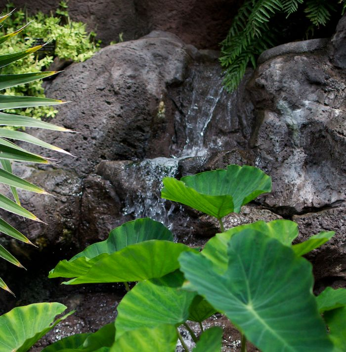 Waterfall at botanical gardens (1)