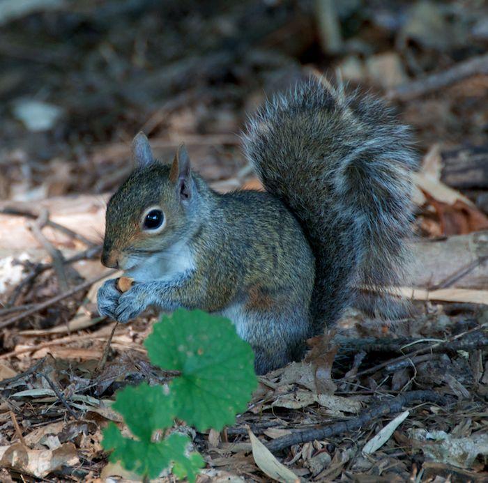Squirrel ground 1