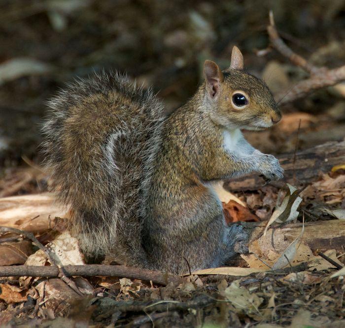 Squirrel ground 3