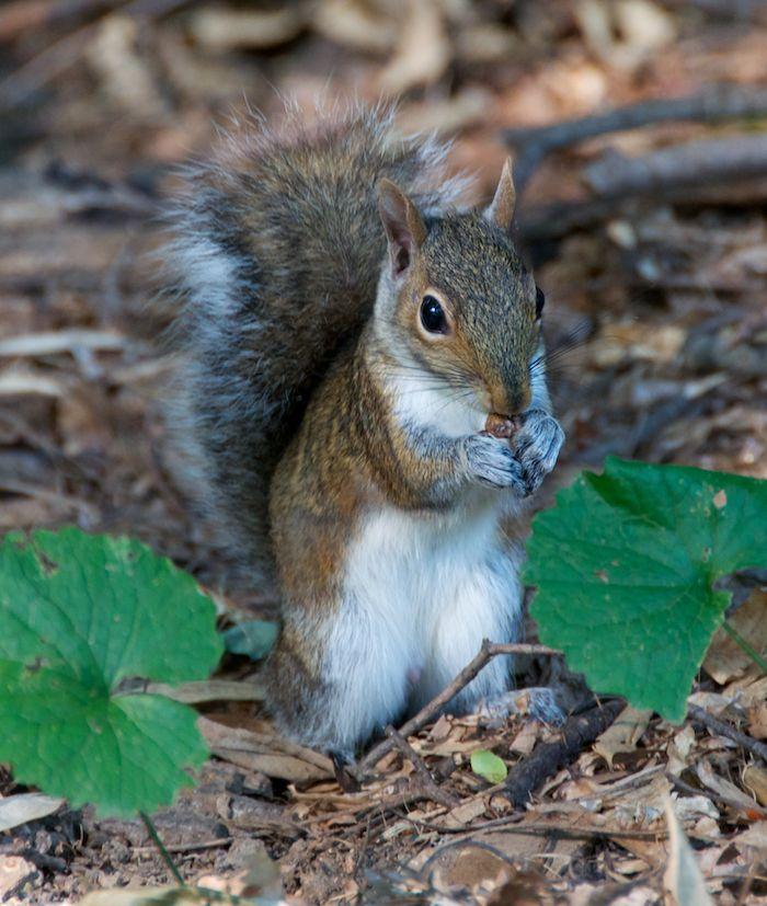 Squirrel ground 4