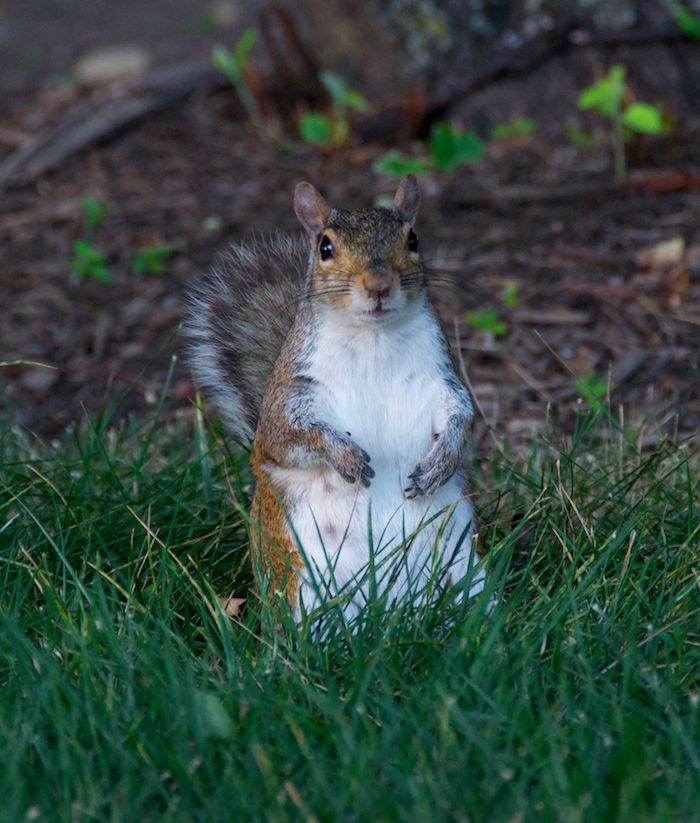 Washington dc squirrel 2