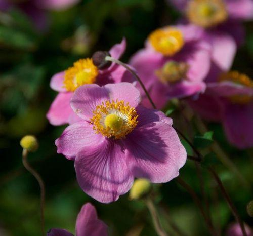 Pink flower washington dc zoo